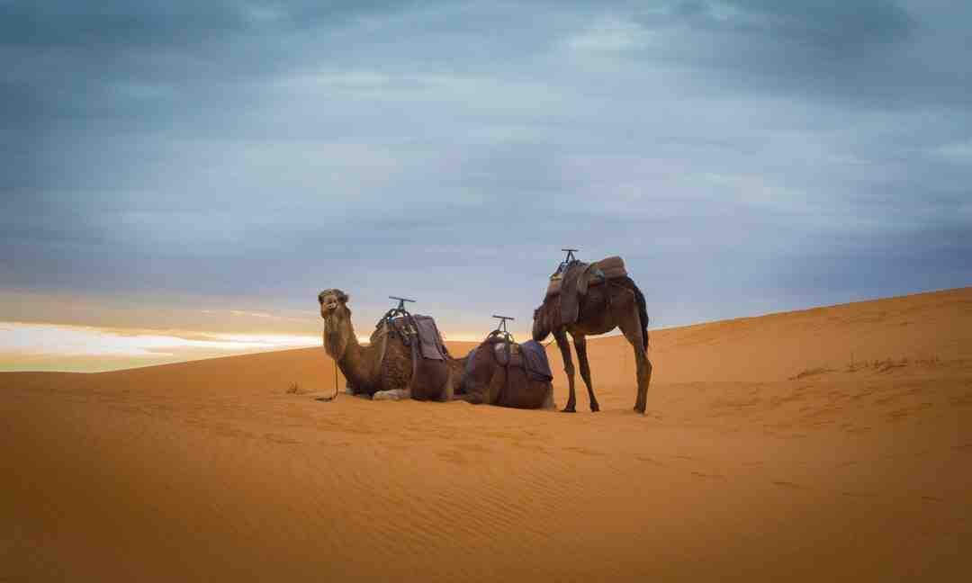 Quelle hauteur de sable pour pavé autobloquant ?