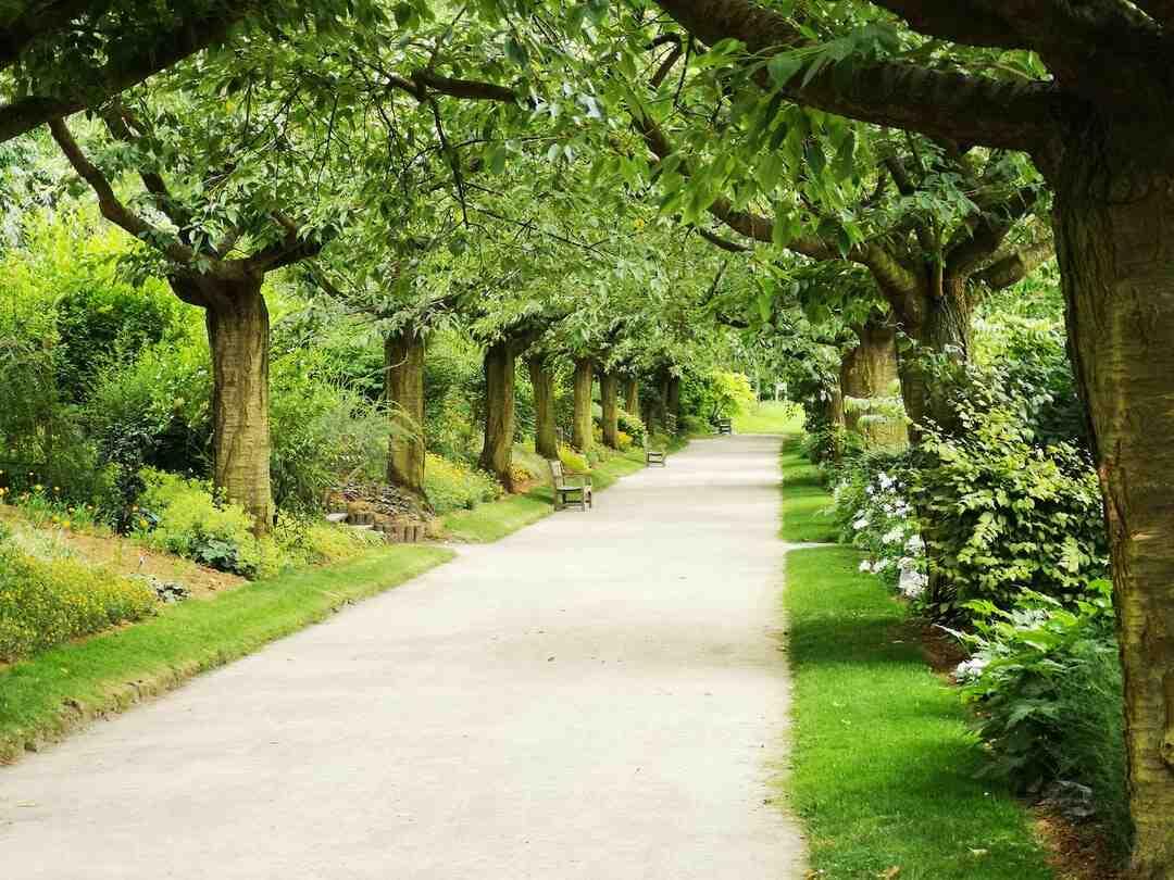 Comment entretenir un jardin minéral ?