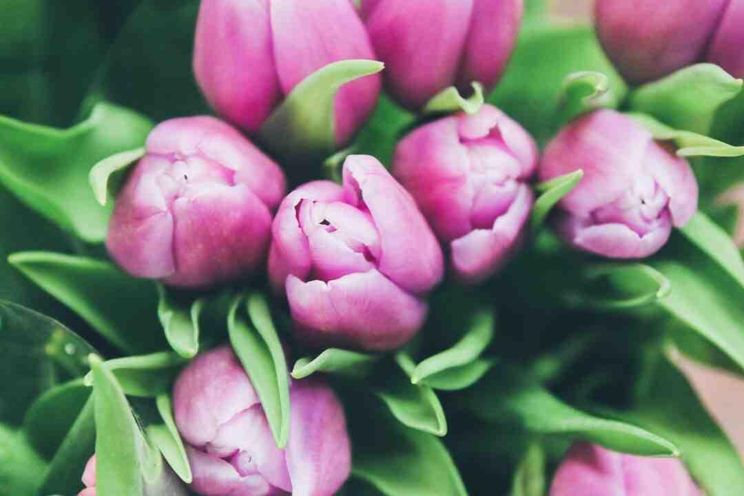 Comment faire un parterre de fleur en pente ?