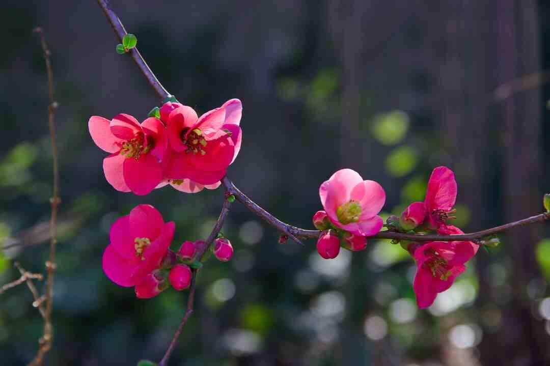 Quelle plante pour un jardin minéral ?